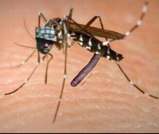 virus zika negro whatsapp