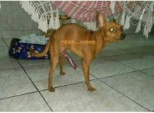 El perro del negro del whatsapp