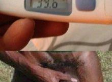 Negro del WhatsApp con fiebre y Coronavirus